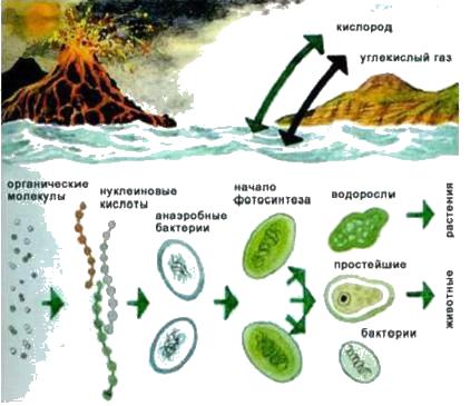 анимация микробов